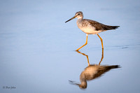 Gr8tr Yellowlegs-3