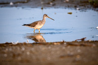 Gr8tr Yellowlegs-6