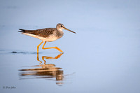 Gr8tr Yellowlegs-7